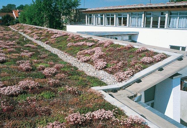 """""""Зеленые """" крыши препятствуют нагреванию кровли в жару и защищают..."""