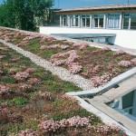 Зеленый ландшафт на крыше! Тенденции экологичного строительства от PAUL BAUDER GMBH