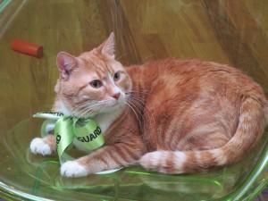"""Приглашенная """"звезда"""" - кот Имбирь"""