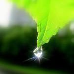 Российский Paroc получил экологический сертификат EcoStandart GREEN