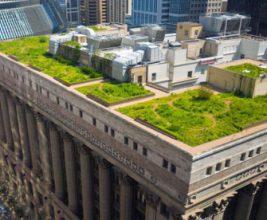 «Зеленым» крышам в кварталах реновации предпочли «зеленые» стены