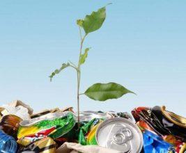 Минприроды Калининградской области окажет поддержку переработчикам отходов