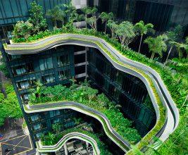 В Москве состоится конференция «Технологии озеленения крыш: расширяя пространство для города»